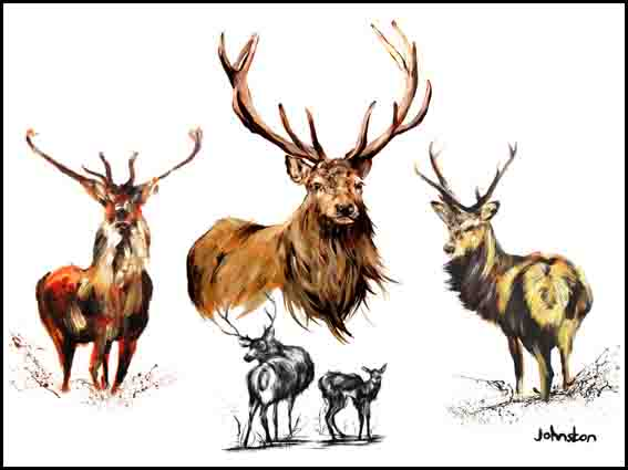 Stag Collage
