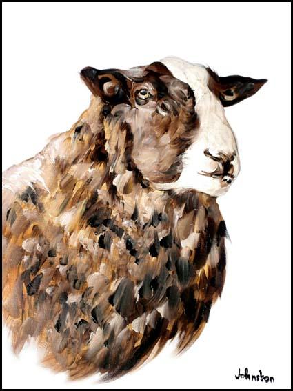 Zwartbles Sheep (1)