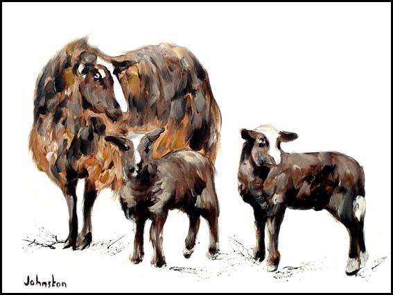 Zwartbles Sheep and Lambs